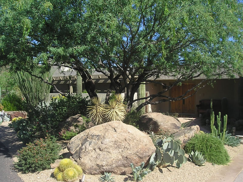 properly shaped mesquite