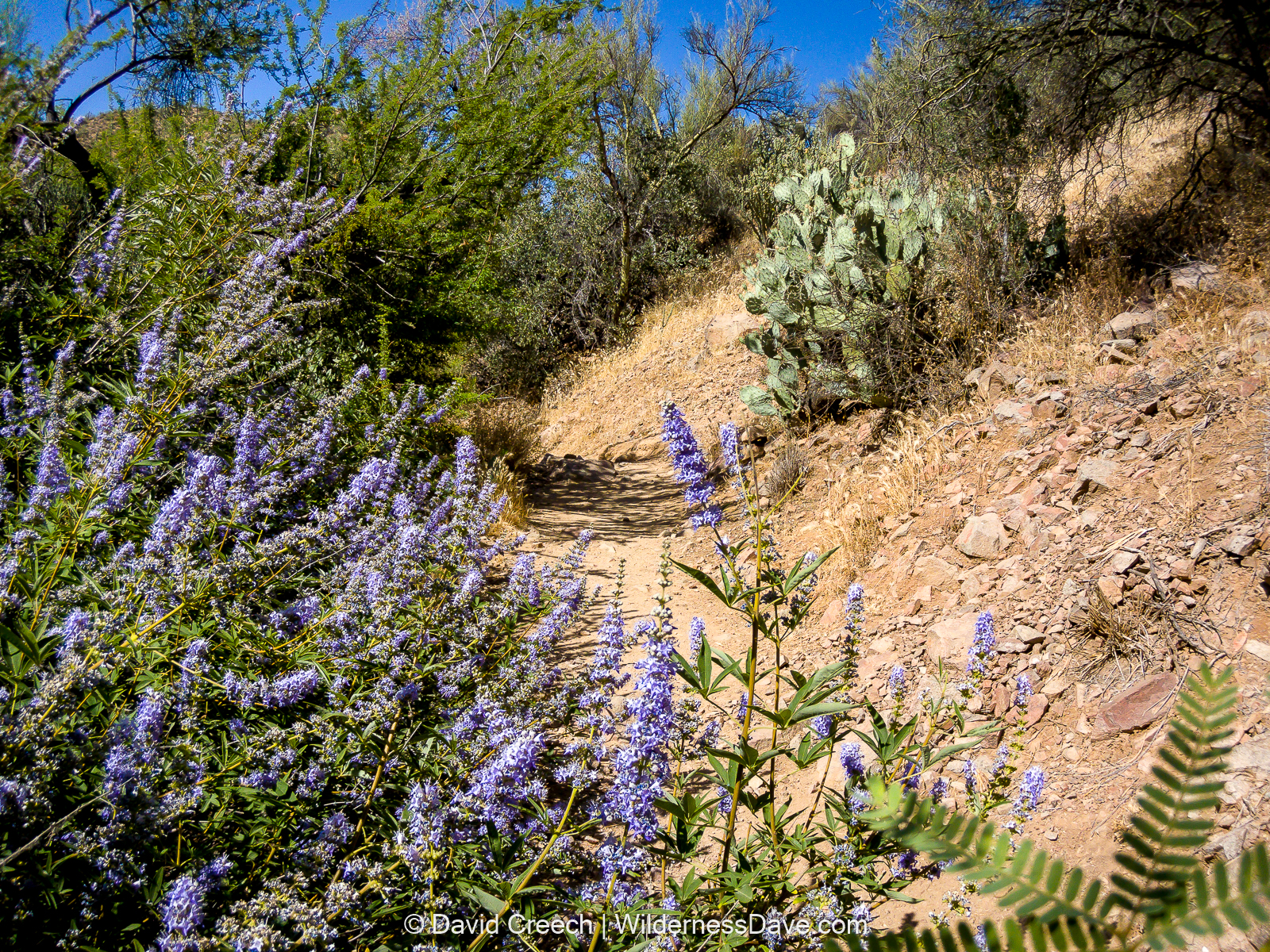 landscape revegetation